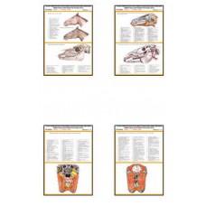 Плакаты ПРОФТЕХ