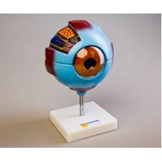 Модель глаза