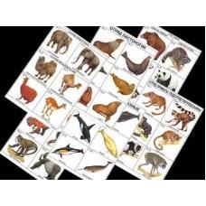 Комплект таблиц по зоологии раздат.