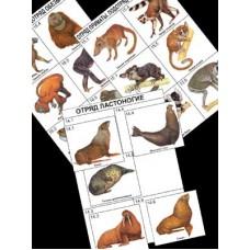 Комплект дидактических карточек: