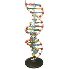 Модель структуры ДНК (разборная)