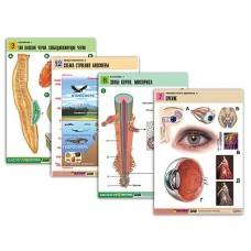 Комплект таблиц по всему курсу биологии (120 шт., А1, полноцв, лам)
