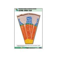Рельефная таблица